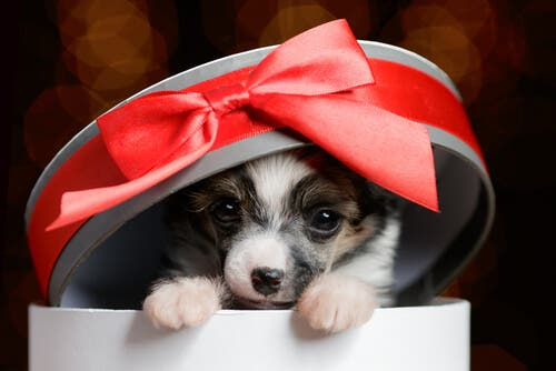 Regalare un animale per Natale può non essere sempre una buona idea.