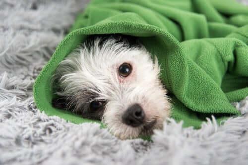 Consigli per prevenire il raffreddore nei cani