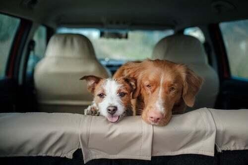 Perché non bisogna lasciare il cane chiuso in auto