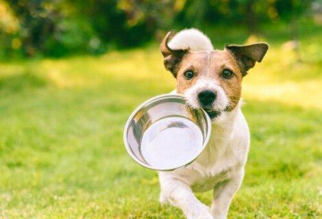 La denutrizione tra i motivi per cui il cane lecca il muro