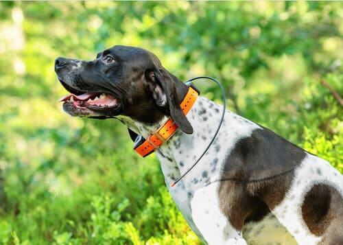 Come funzionano i localizzatori GPS per cani?