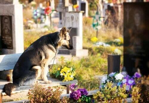 Cane nella tomba del suo proprietario