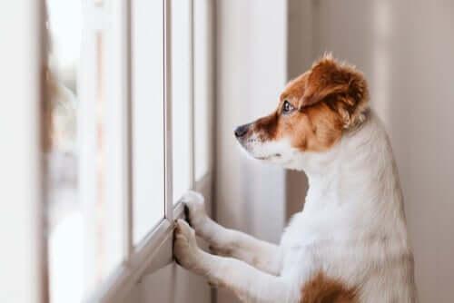 Il cane lecca il muro: ecco perché lo fa
