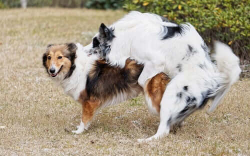 Il comportamento del cane dopo la sterilizzazione