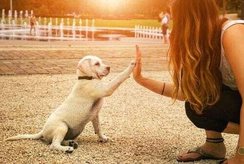 Comportamento del cane con la padrona
