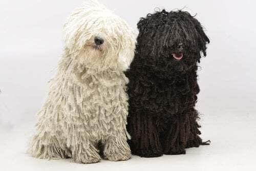 Coppia di cani uno bianco e uno nero