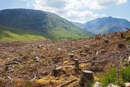 Deforestazione, tra le cause della sesta estinzione di massa