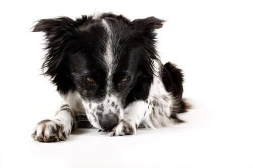 Eccesso di pulizia nei cani: come prevenirlo e trattarlo