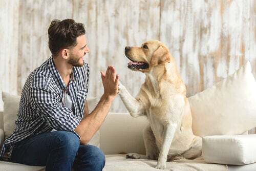 Cos'è l'etologia canina e di cosa si occupa?