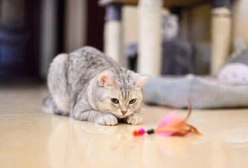 Giocare per evitare lo stress nei gatti durante la quarantena