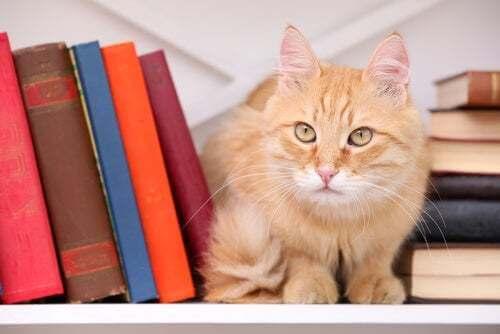 Gatti e letteratura: ispirazione per gli scrittori