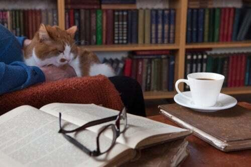 Gatto e scrittori