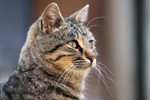 A che cosa servono i baffi dei gatti?