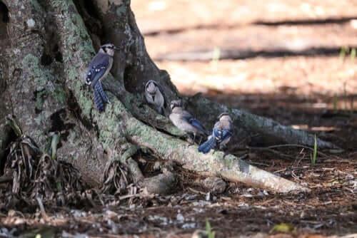 gruppo di uccelli ai piedi di un albero