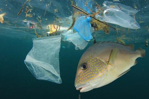 l'inquinamento ambientale ha creato masse di acqua contaminate e insalubri