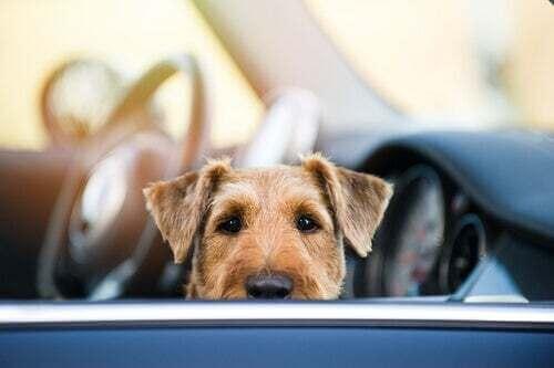 Lasciare il cane in auto