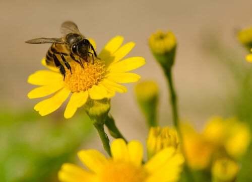 In che modo le api producono il miele?