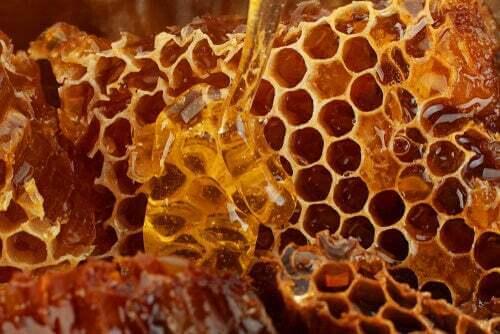 Ape che raccoglie miele