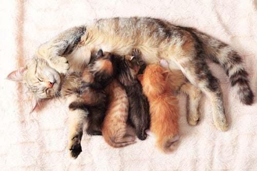 7 consigli per assistere al parto della vostra gatta