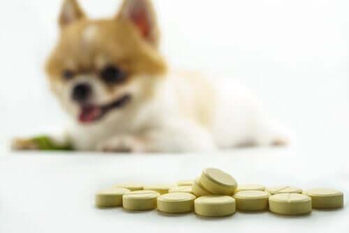 somministrare ibuprofene e paracetamolo ai cani potrebbe essere molto pericoloso