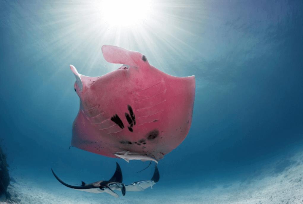pesce rosa nel mare