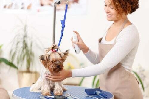Spray antiparassitario per cani: perché usarlo