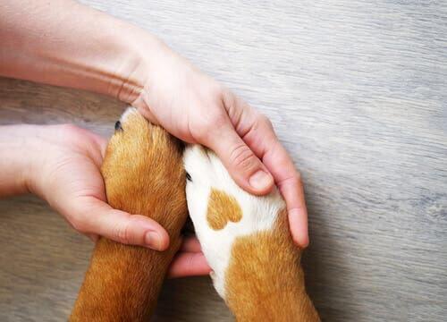 grazie ai localizzatori GPS per cani è possibile ritrovare tempestivamente il proprio animale