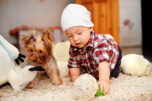 Bambino gioca con cane di piccola taglia