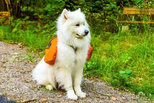 Borsa per cani: 4 consigli per scegliere la migliore