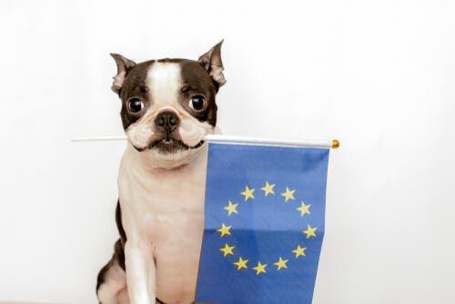 La convenzione europea per la protezione degli animali da compagnia