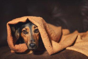 Il comportamento compulsivo negli animali