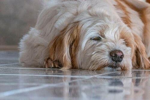 Spasmi muscolari nei cani: cosa fare?
