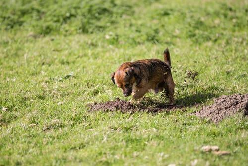 Cane scava buca e rovina il giardino