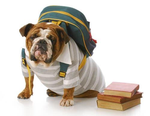 Cane con zaino e libri