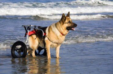 Carrellini per cani: vantaggi e modelli