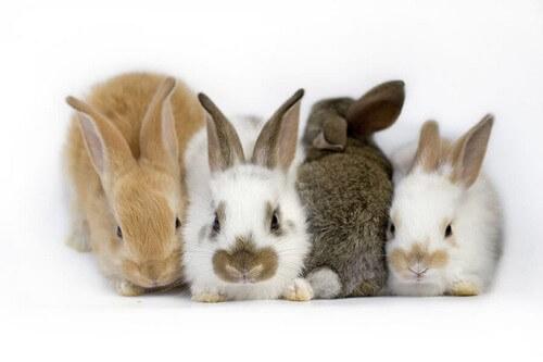 Sindrome vestibolare nel coniglio: di cosa si tratta?