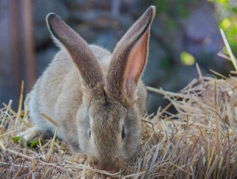 Coniglio che mangia