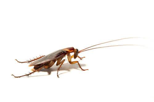 Corpo degli scarafaggi tra gli animali più antichi