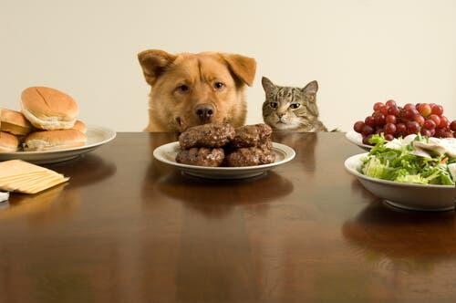 Cane e gatto a tavola