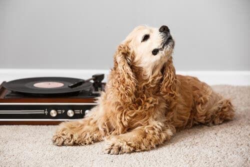 Gli effetti della musica sugli animali
