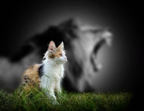 Perché i gatti non ruggiscono come i leoni?