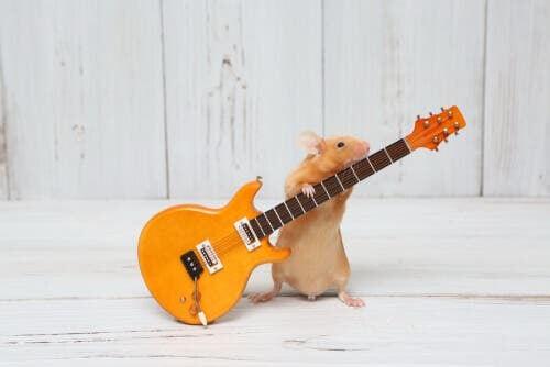 Criceto con la chitarra per combattere ansia da separazione