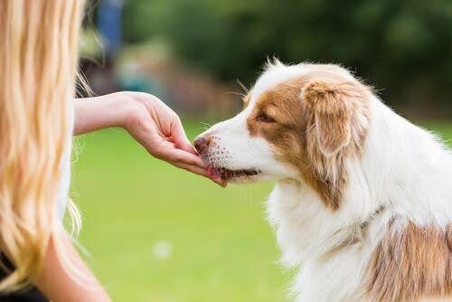 L'importanza della ricompensa per il cane