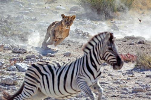 Selezione naturale e adattamento nel mondo animale