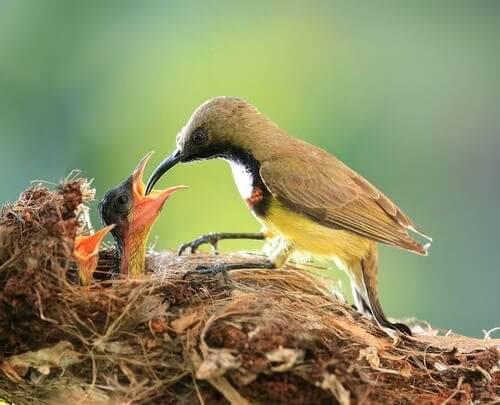 Nido di uccelli: cure dei genitori tra animali