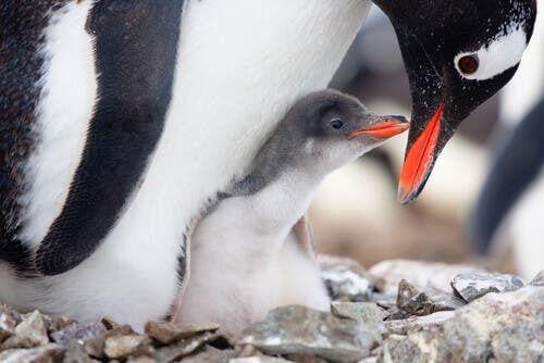 Le cure parentali tra gli animali: amore o interesse?
