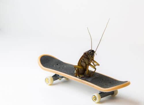 Gli scarafaggi: insetti antichissimi e con una resistenza da record