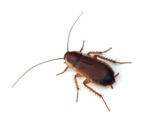 9 curiosità sugli scarafaggi che vi lasceranno a bocca aperta
