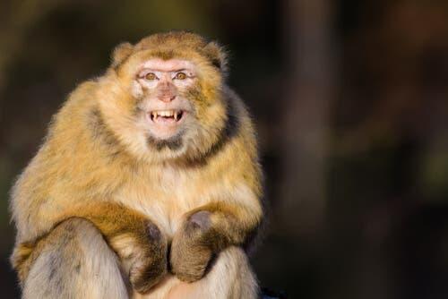 Alle scimmie non piacciono i turisti, rispettiamole!