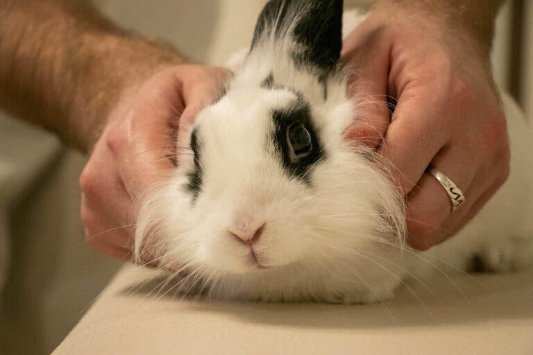 Sindrome vestibolare nel coniglio